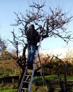 Jansen boomverzorging bomen snoeien