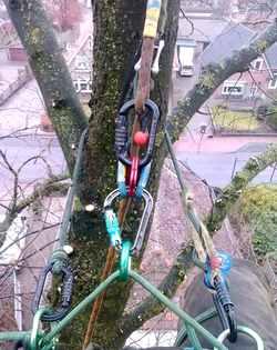 Jansen boomverzorging klimtechnieken