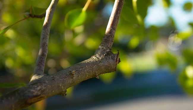 Jansen boomverzorging snoeien