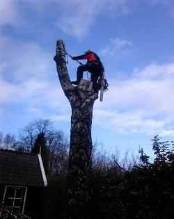 Jansen boomverzorging kappen van bomen