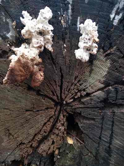 Jansen boomverzorging en boomadvies