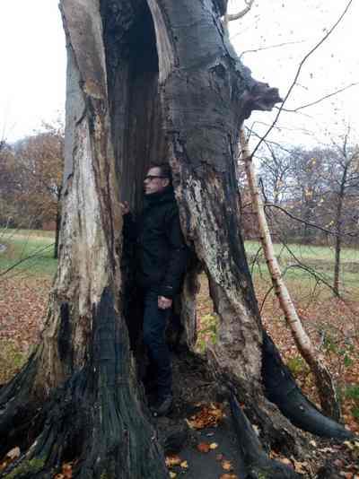 Jansen boomverzorging boomonderzoek en VTA controle