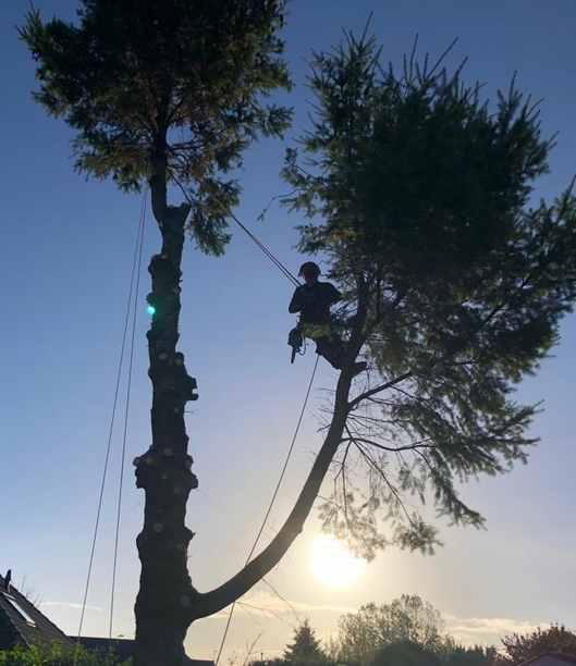 Jansen boomverzorging boomverzorger Lunteren