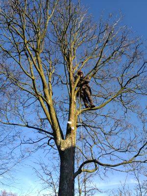 Jansen boomverzorging Barneveld